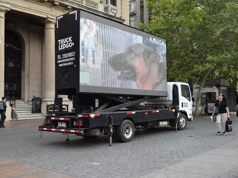 arriendo camion led tenencia mascotas 8